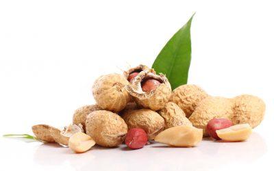 Makan Kacang Bisa Turunkan Berat Badan, Benarkah?