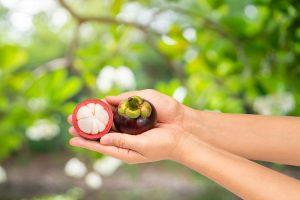 manfaat-buah-manggis-untuk-ibu-hamil